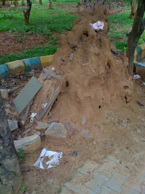 Fig. 4: termite mound on 27th May 2011