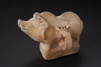 Boar rattle John Hopkins AM